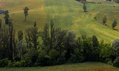 Felino hills